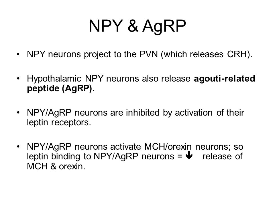 NPY & AgRP NPY neurons project to the PVN (which releases CRH).
