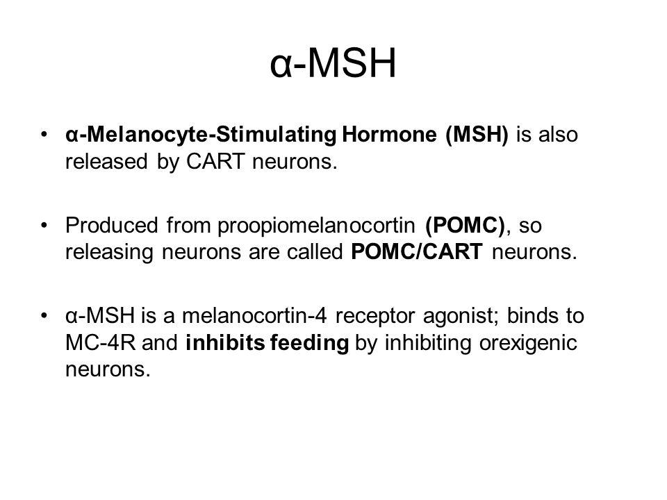 α-MSH α-Melanocyte-Stimulating Hormone (MSH) is also released by CART neurons.