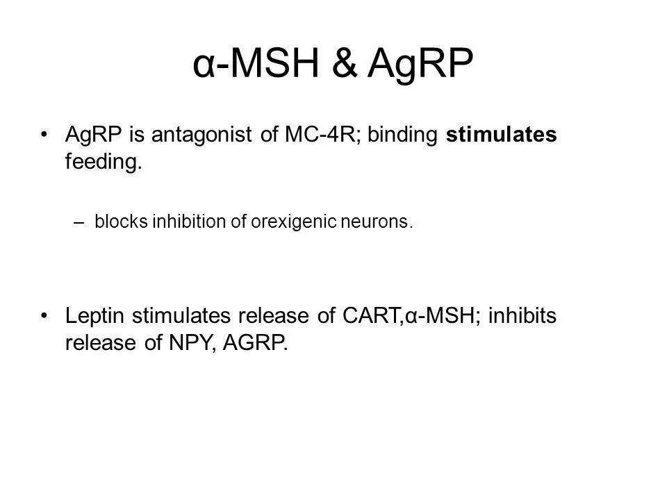 α-MSH & AgRP AgRP is antagonist of MC-4R; binding stimulates feeding.