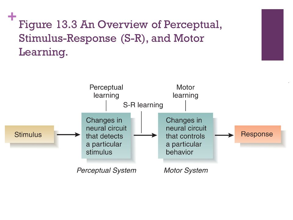 Figure 13.3 An Overview of Perceptual, Stimulus-Response (S-R), and Motor Learning.