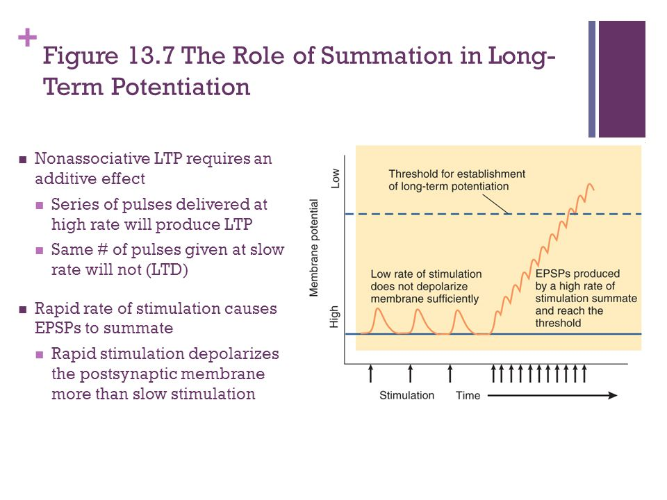Figure 13.7 The Role of Summation in Long-Term Potentiation