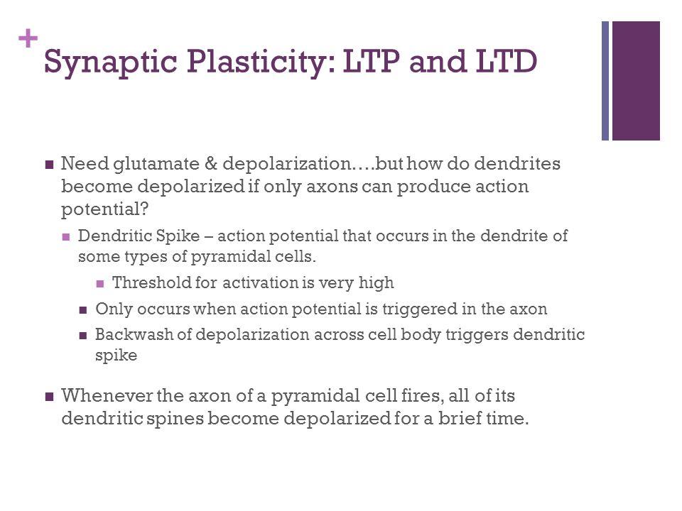 Synaptic Plasticity: LTP and LTD