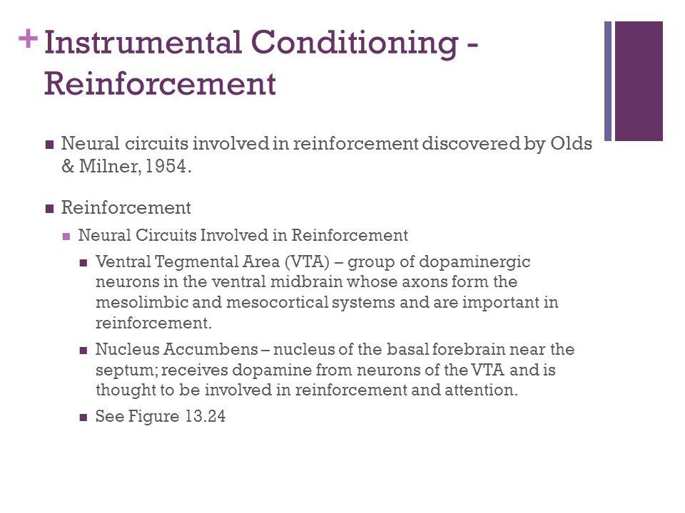 Instrumental Conditioning - Reinforcement