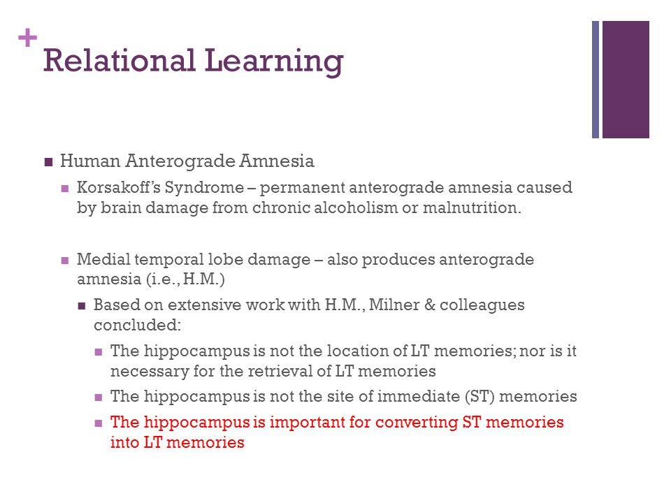 Relational Learning Human Anterograde Amnesia