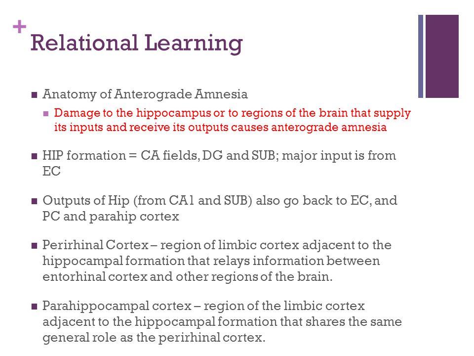 Relational Learning Anatomy of Anterograde Amnesia
