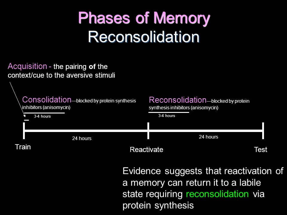 Phases of Memory Reconsolidation