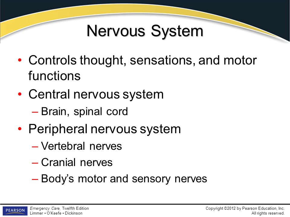 Nervous System Controls thought, sensations, and motor functions