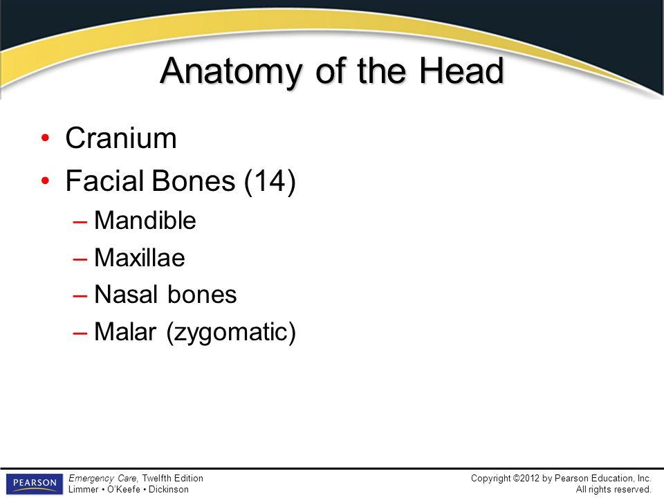 Anatomy of the Head Cranium Facial Bones (14) Mandible Maxillae