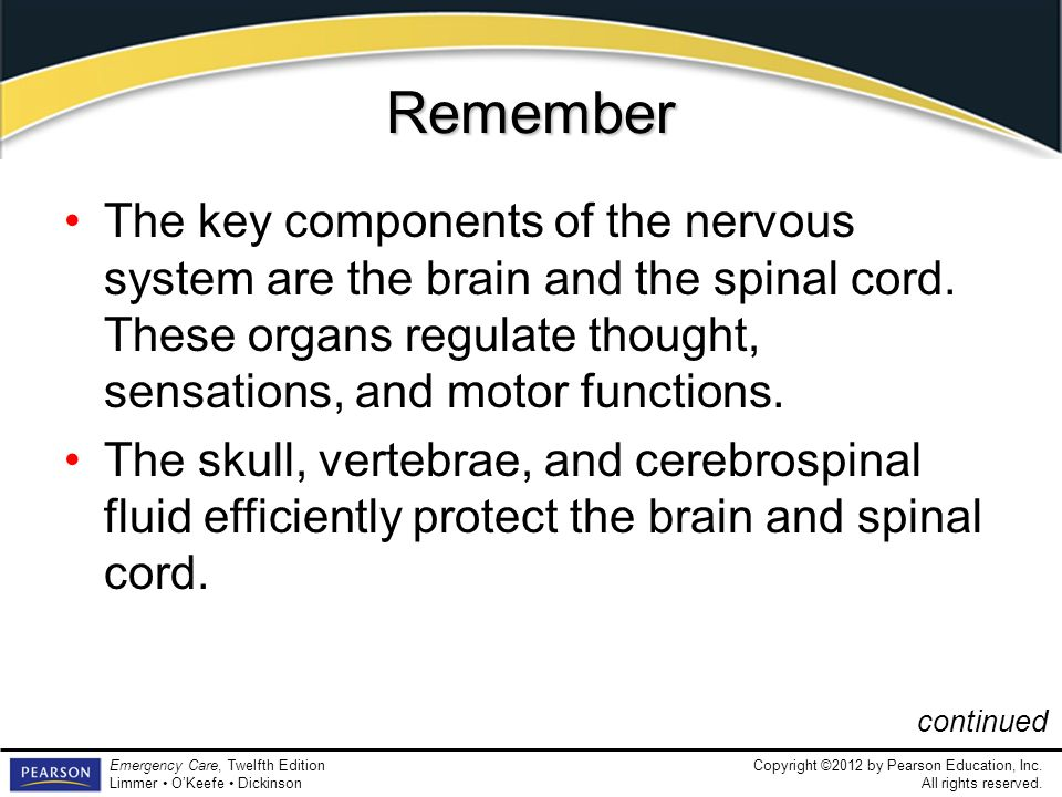 RememberThe key components of the nervous system are the brain and the spinal cord. These organs regulate thought, sensations, and motor functions.