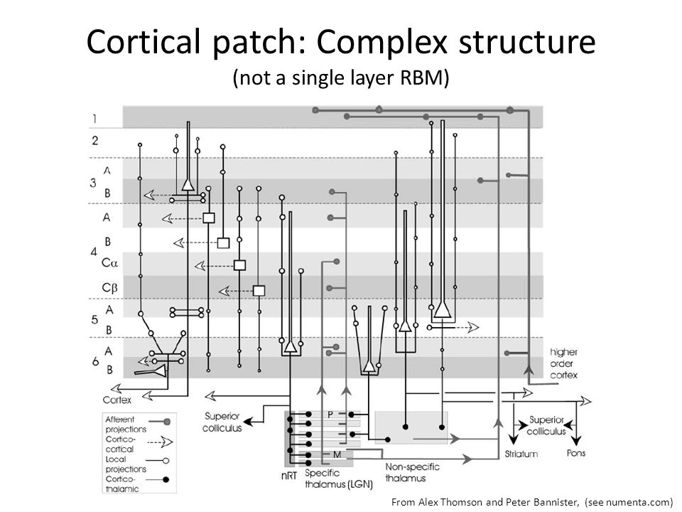 Cortical patch: Complex structure (not a single layer RBM)