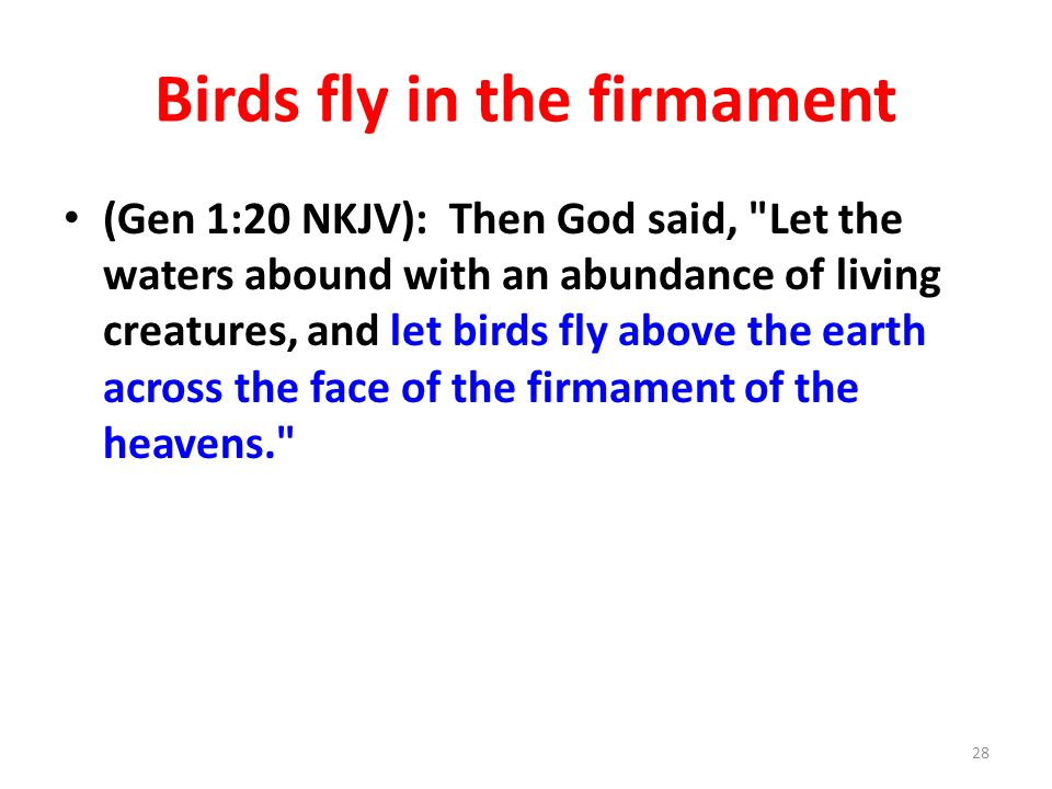 Birds fly in the firmament