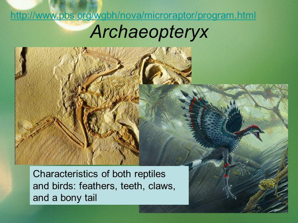 Archaeopteryx http://www.pbs.org/wgbh/nova/microraptor/program.html