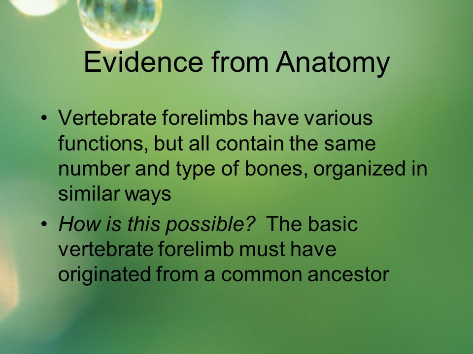 Evidence from Anatomy Vertebrate forelimbs have various functions, but all contain the same number and type of bones, organized in similar ways.