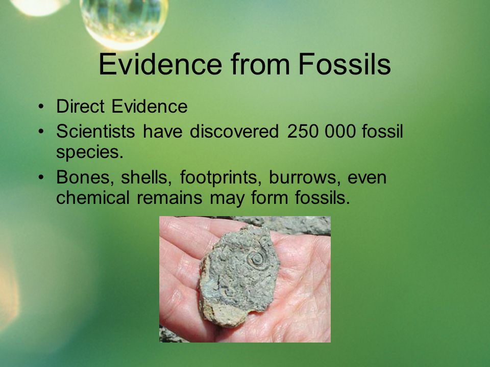 Evidence from Fossils Direct Evidence