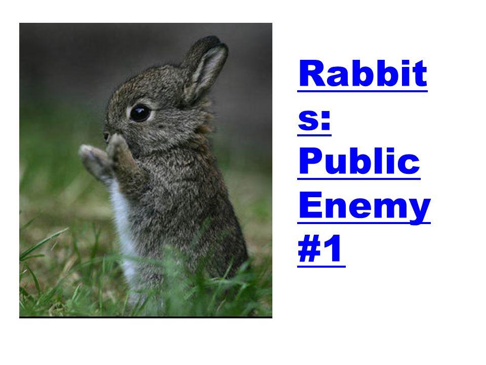 Rabbits: Public Enemy #1