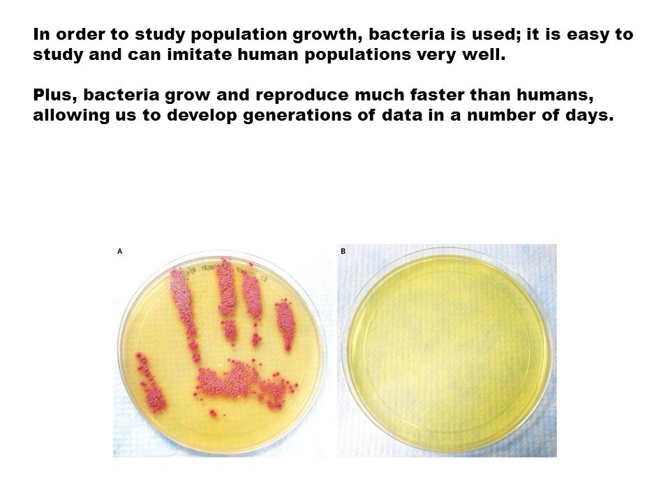 In order to study population growth, bacteria is used; it is easy to study and can imitate human populations very well.