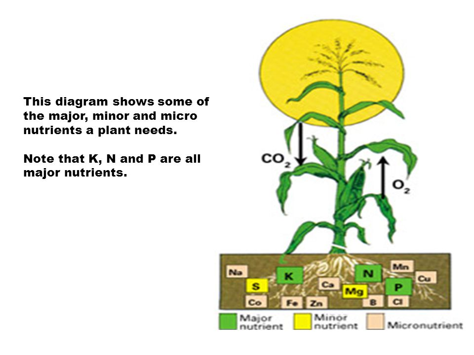 This diagram shows some of the major, minor and micro nutrients a plant needs.