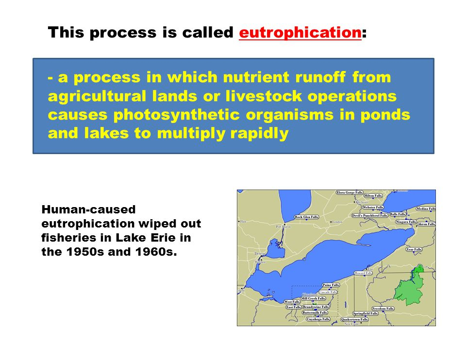 This process is called eutrophication: