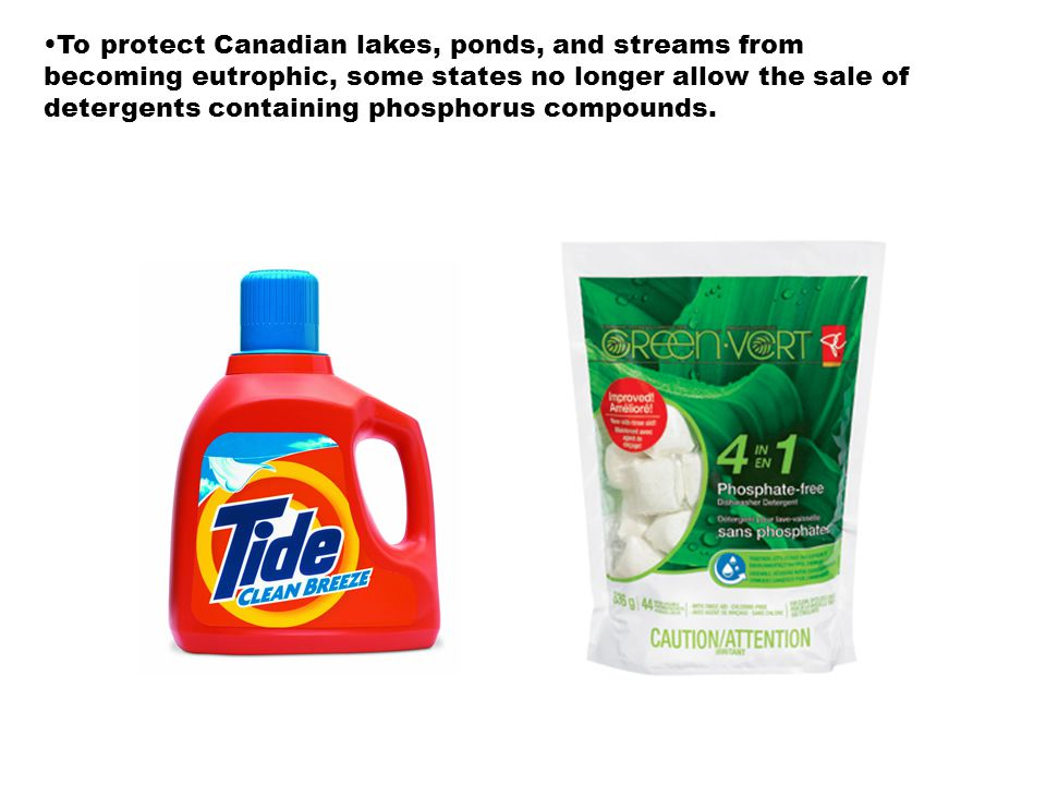 To protect Canadian lakes, ponds, and streams from becoming eutrophic, some states no longer allow the sale of detergents containing phosphorus compounds.