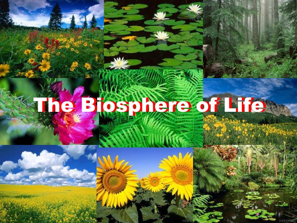 The Biosphere of Life