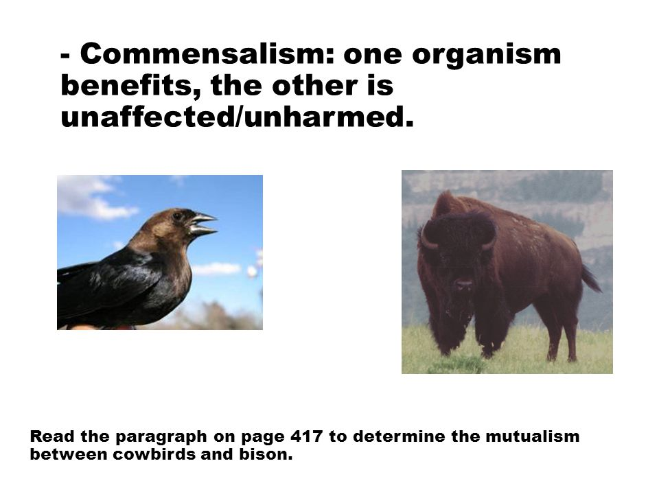 - Commensalism: one organism benefits, the other is unaffected/unharmed.