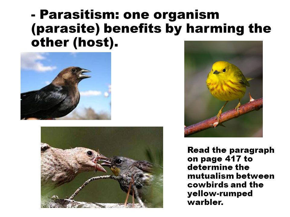 - Parasitism: one organism (parasite) benefits by harming the other (host).