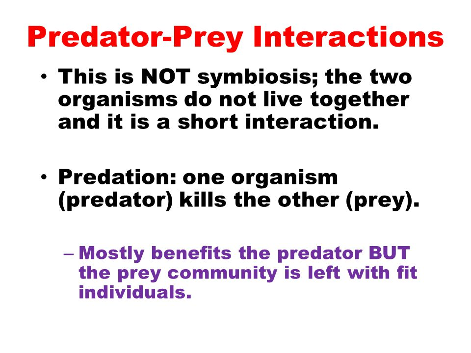 Predator-Prey Interactions
