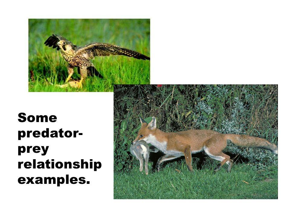 Some predator-prey relationship examples.