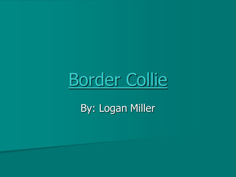 Border Collie By: Logan Miller