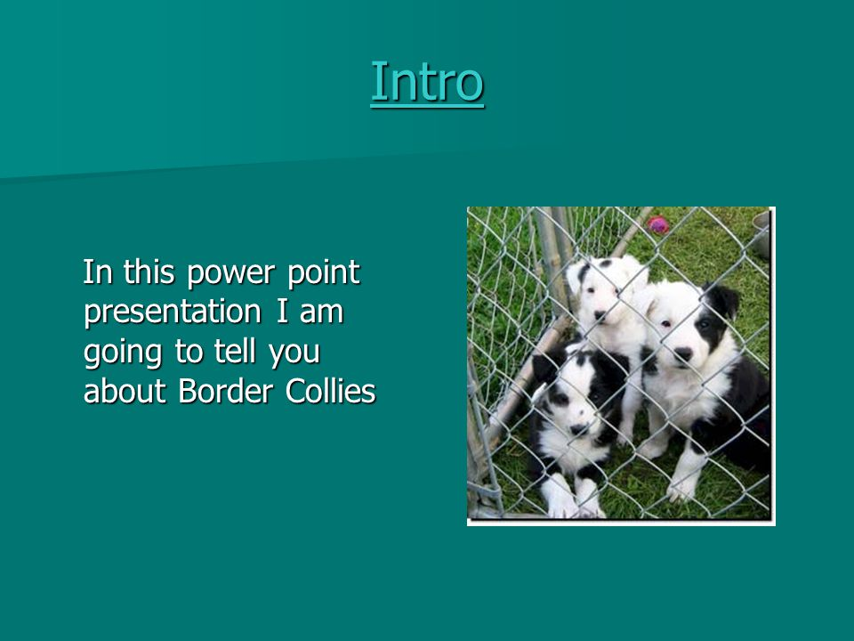 Intro In this power point presentation I am going to tell you about Border Collies