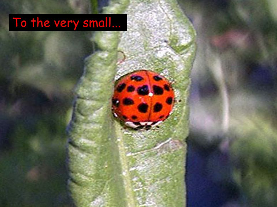 To the very small...