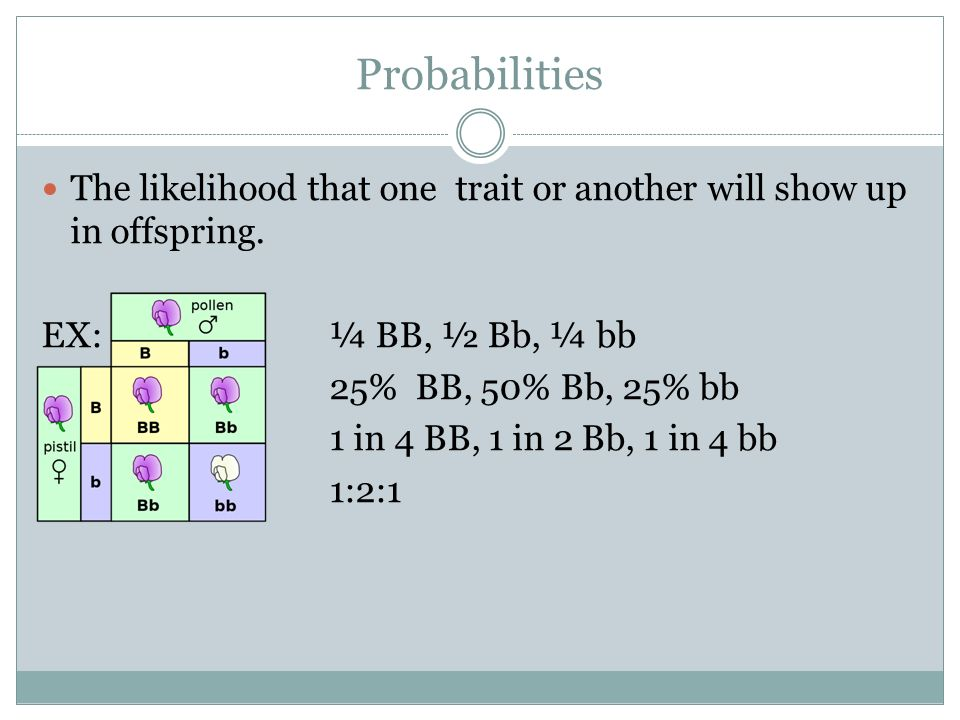Probabilities The likelihood that one trait or another will show up in offspring. EX: ¼ BB, ½ Bb, ¼ bb.