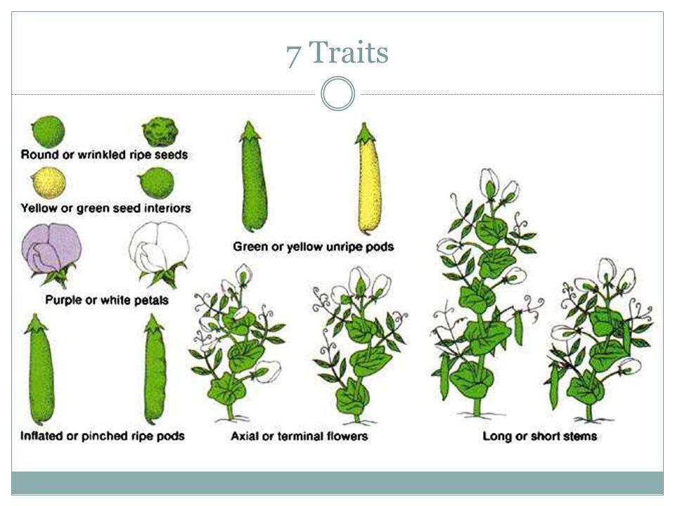 7 Traits