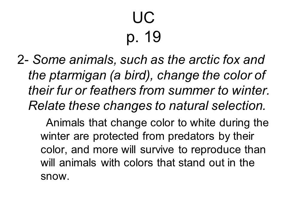 UC p. 19