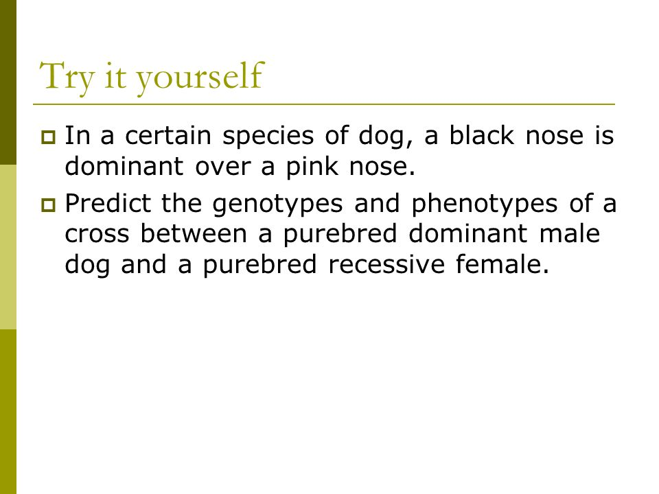 Try it yourself In a certain species of dog, a black nose is dominant over a pink nose.