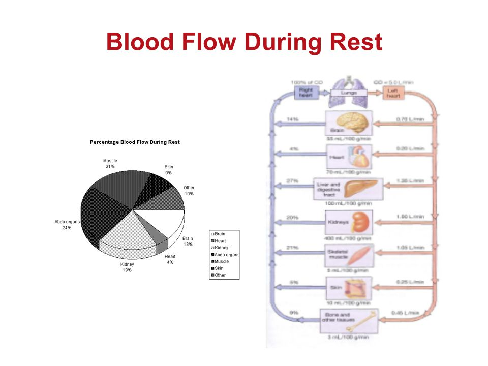 Blood Flow During Rest