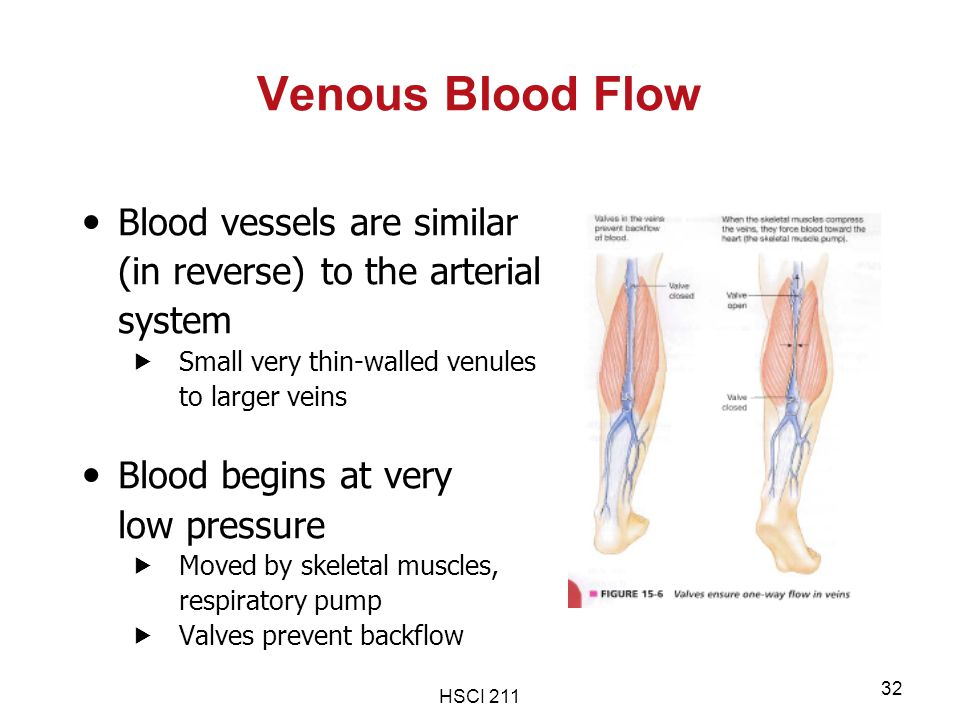 Venous Blood Flow Blood vessels are similar