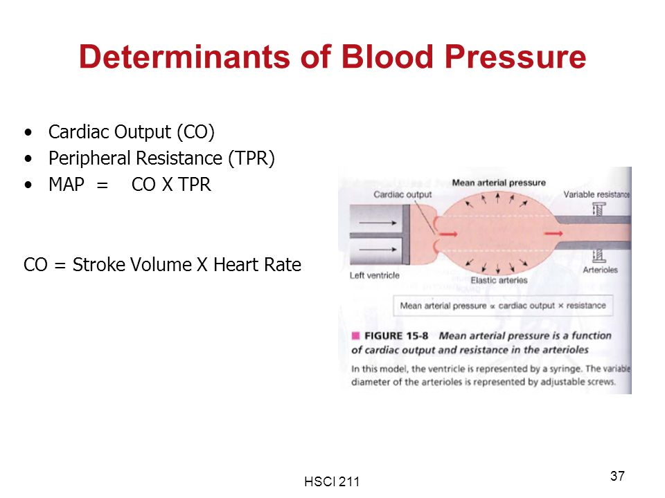 Determinants of Blood Pressure