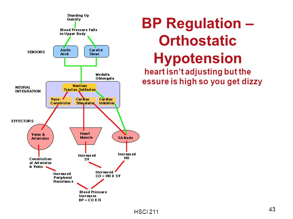 BP Regulation – Orthostatic Hypotension heart isn't adjusting but the pressure is high so you get dizzy