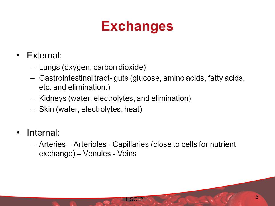 Exchanges External: Internal: Lungs (oxygen, carbon dioxide)