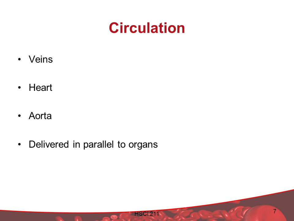 Circulation Veins Heart Aorta Delivered in parallel to organs HSCI 211