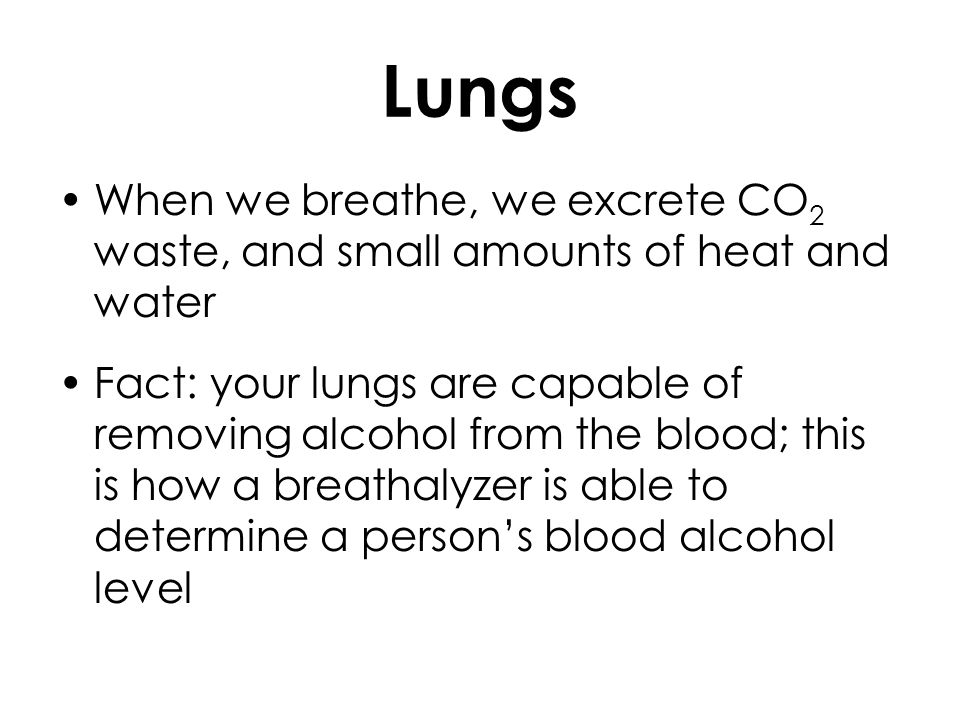 Lungs When we breathe, we excrete CO2 waste, and small amounts of heat and water.