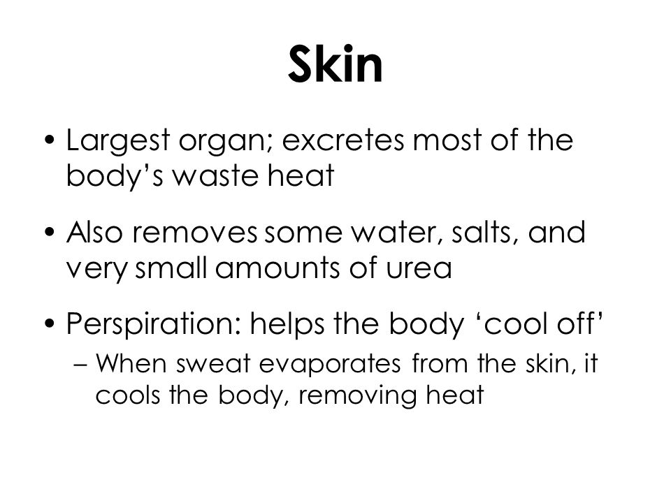 Skin Largest organ; excretes most of the body's waste heat
