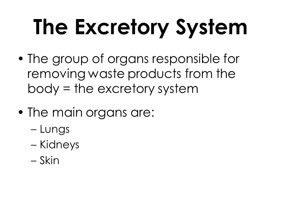 The Excretory System The group of organs responsible for removing waste products from the body = the excretory system.