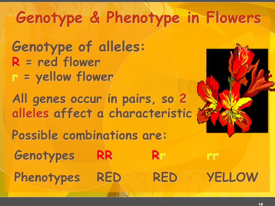 Genotype & Phenotype in Flowers