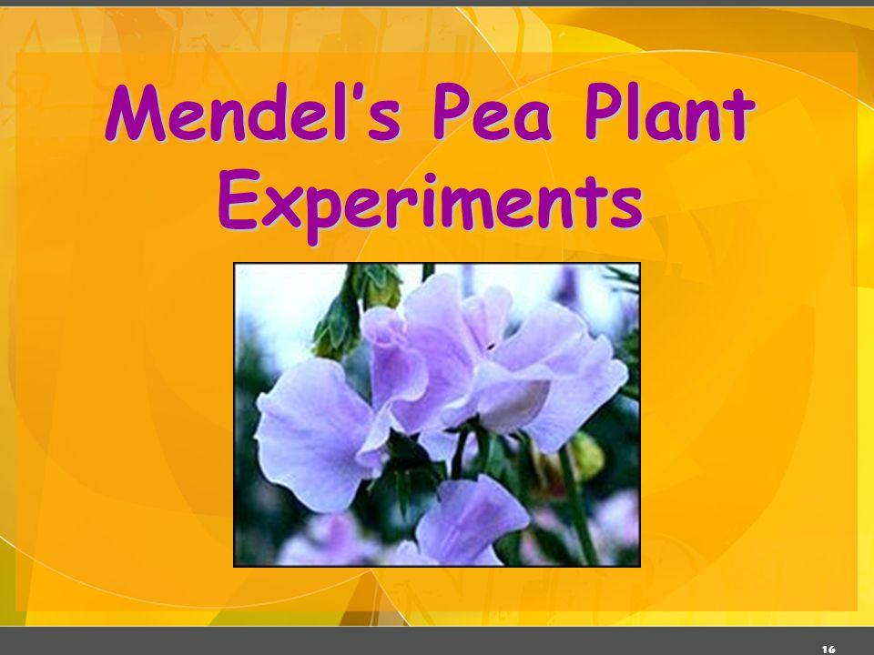 Mendel's Pea Plant Experiments