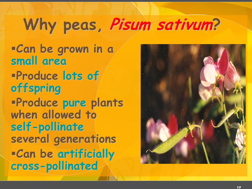 Why peas, Pisum sativum Can be grown in a small area