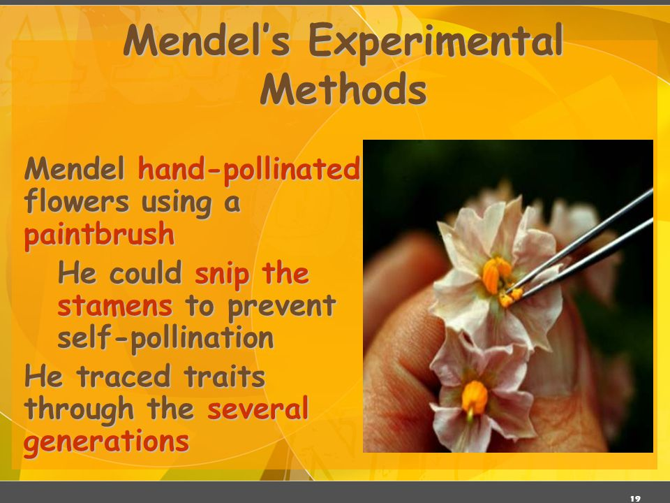 Mendel's Experimental Methods