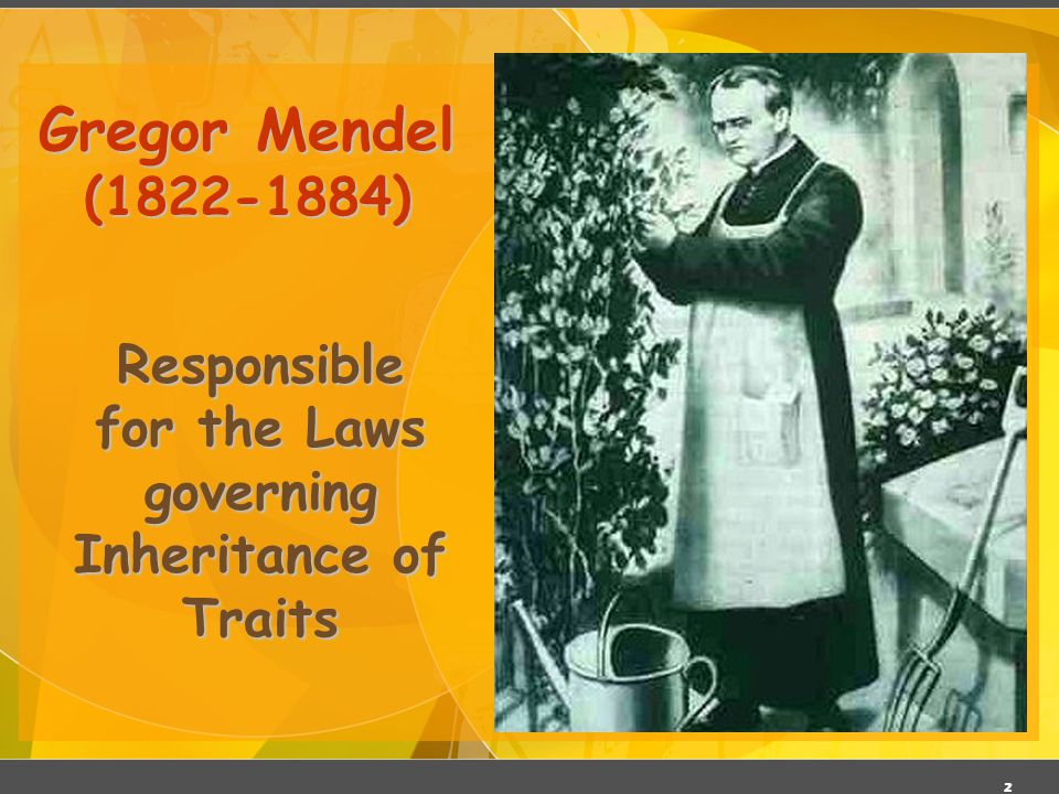 Responsible for the Laws governing Inheritance of Traits