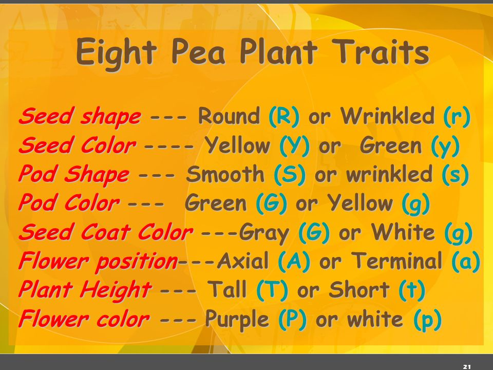 Eight Pea Plant Traits Seed shape --- Round (R) or Wrinkled (r)